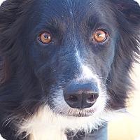 Adopt A Pet :: JAGGER - San Pedro, CA