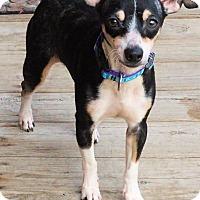 Adopt A Pet :: Dobby - Toledo, OH