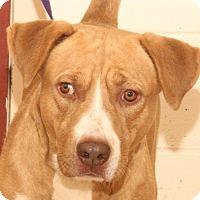 Retriever (Unknown Type) Mix Dog for adoption in McDonough, Georgia - ROSCOE