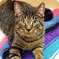 Adopt A Pet :: Leonard - Bristol, CT