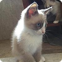 Adopt A Pet :: Audra - Austin, TX