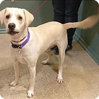 Adopt A Pet :: Moonshine - Atlantic City, NJ