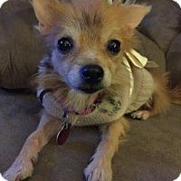 Adopt A Pet :: Josie - Nesquehoning, PA