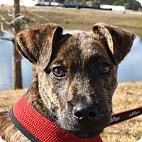 Adopt A Pet :: Jameson - Pembroke, GA