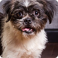 Adopt A Pet :: Brewster - Owensboro, KY