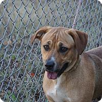 Adopt A Pet :: Princess - Peace Dale, RI