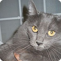 Adopt A Pet :: Uki - Ridgecrest, CA