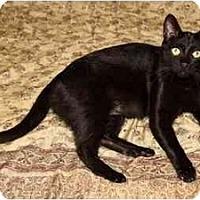 Adopt A Pet :: Bobby - West Los Angeles, CA