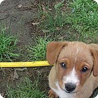 Adopt A Pet :: Sierra - Humboldt, TN