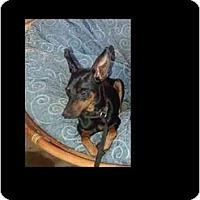 Adopt A Pet :: Thunder - Phoenix, AZ
