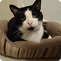 Adopt A Pet :: Simmons - West Dundee, IL
