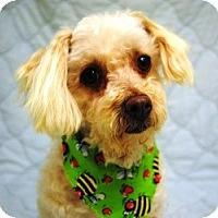 Adopt A Pet :: Archie - Evans, CO