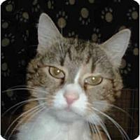 Adopt A Pet :: Maddie - Mission, BC