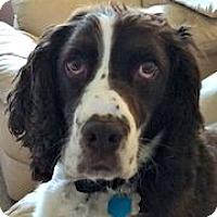 Adopt A Pet :: Buddy - Minneapolis, MN