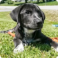 Adopt A Pet :: Abbi - in Maine - kennebunkport, ME