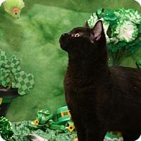 Adopt A Pet :: Fuzzy - Bedford, TX