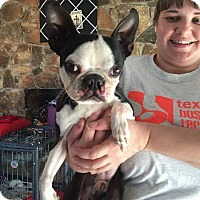 Adopt A Pet :: Blaise - Weatherford, TX