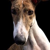 Adopt A Pet :: Bama - Swanzey, NH