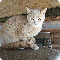 Adopt A Pet :: Troy - Sanford, ME
