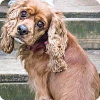 Adopt A Pet :: Hobbs - Sugarland, TX