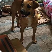 Adopt A Pet :: Sam - Rexford, NY