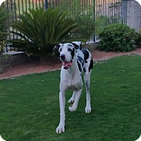 Adopt A Pet :: Shadow - Goodyear, AZ