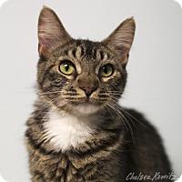 Adopt A Pet :: Sherri - Los Angeles, CA