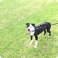 Adopt A Pet :: Chevy - Arlington, TX