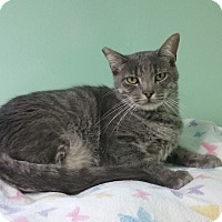 Adopt A Pet :: Mercury - Lunenburg, MA
