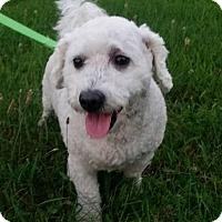 Adopt A Pet :: Sheldon - Grand Rapids, MI