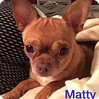 Adopt A Pet :: Matty - Hedgesville, WV