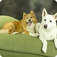 Husky Mix Dog for adoption in Anchorage, Alaska - Aspen