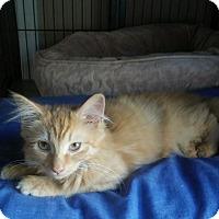 Adopt A Pet :: Tempest - Trevose, PA