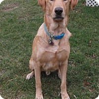 Adopt A Pet :: Inti - San Francisco, CA