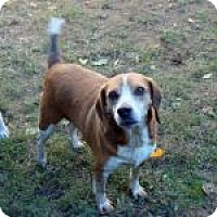 Adopt A Pet :: Zeus - Dumfries, VA