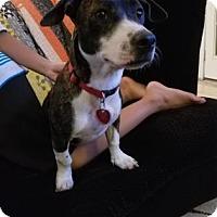 Adopt A Pet :: Lera - Santa Fe, TX