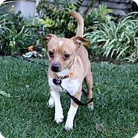 Adopt A Pet :: NEO - Newport Beach, CA
