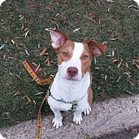 Adopt A Pet :: Lilia - Hainesville, IL