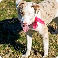 Adopt A Pet :: Lacy - Goodlettsville, TN