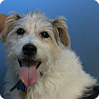 Adopt A Pet :: Maxx - New Richmond,, WI