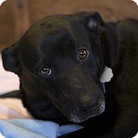 Adopt A Pet :: Adelaide - Durham, NC