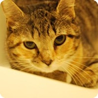Adopt A Pet :: .Zenon - Baltimore, MD