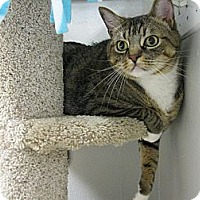 Adopt A Pet :: GUPPY - Brea, CA