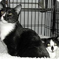 Adopt A Pet :: Molly & Mosby - Bear, DE