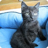 Adopt A Pet :: Huey - Richland, MI