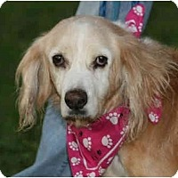 Adopt A Pet :: Flo-ADOPTED - kennebunkport, ME