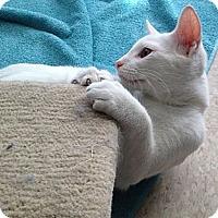 Adopt A Pet :: Winter - Island Park, NY