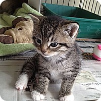 Adopt A Pet :: Max - Island Park, NY