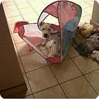Adopt A Pet :: Zeus - Mesa, AZ