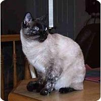 Adopt A Pet :: Katy-Kat - San Ramon, CA
